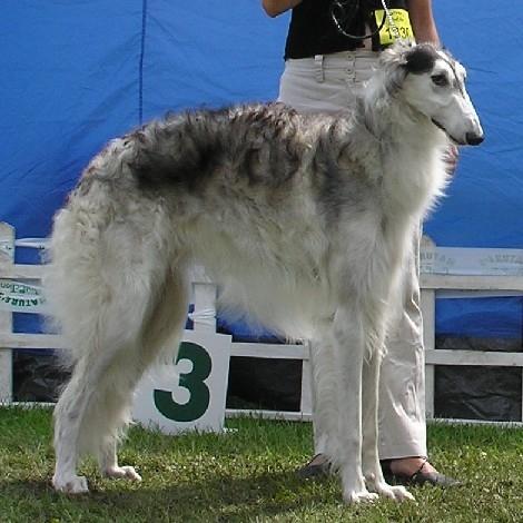 azov01